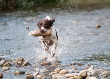 סיבות לאלף כלבים