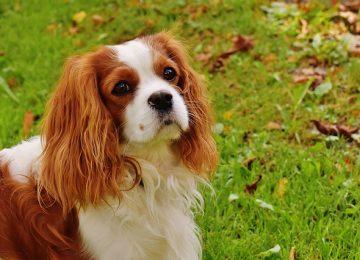 מדוע מומלץ לבחור כלב שגדל בבית גידול