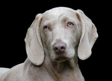 נעים להכיר הילס אוכל לכלבים מומחית בייצור מזון כלבים באיכות גבוהה