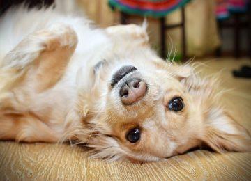 חנות מזון וציוד לבעלי כלבים