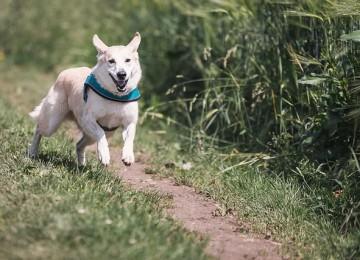 טיפים למציאת מאלף כלבים