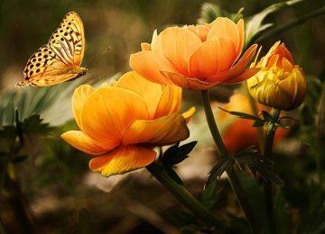 דשן הידרופוני לפריחה