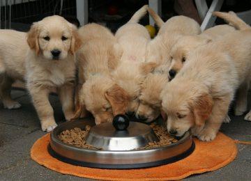 המדריך השלם לבחירת אוכל נכון לכלבים