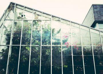 תנו לגדול בשקט: היתרונות של אוהל גידול