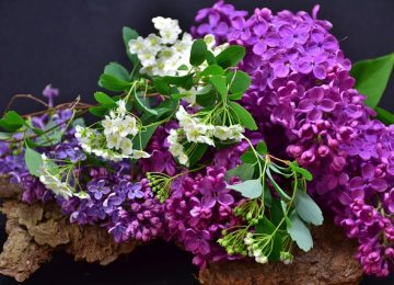 משלוחי פרחים – המתנה המושלמת לכל מי שאוהבים