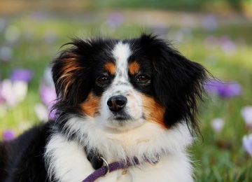 צמצום עלויות טיפול בחיות המחמד באמצעות טיפולי מנע וחיסונים