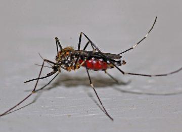 איך תזהו את סוגי החרקים שתוקפים לכם את הבית
