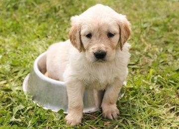 כיצד בוחרים אוכל לכלבים?