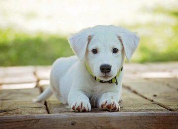 לקחתם גור כלבים? – זה הציוד שתזקקו לו