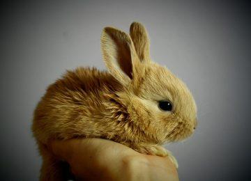 המלצות הוטרינר: טיפים לגידול ארנבים בבית