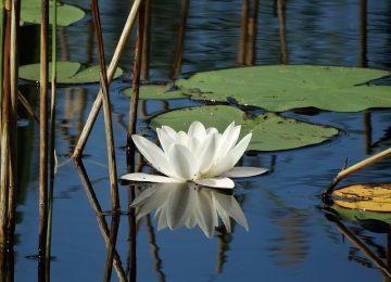 שיפוץ בריכות אקולוגיות – זה משתלם או עדיף חדש